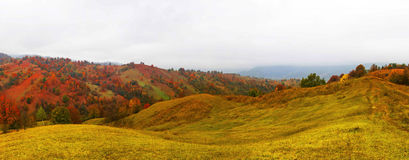 Autumn landscape with scenic colorful view of meadows and trees Royalty Free Stock Images