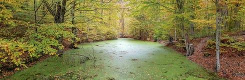 Autumn landscape in Seven Lakes Yedigoller Park Bolu, Turkey Royalty Free Stock Images