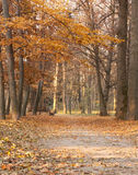 Autumn landscape in shades of brown. Bench and fallen leaves Royalty Free Stock Photography