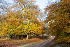 Autumn landscape. A shot of a beautiful autumn colored landscape Stock Images