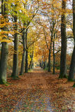 Autumn forrest road. A shot of a road in a beautiful autumn colored landscape Stock Image