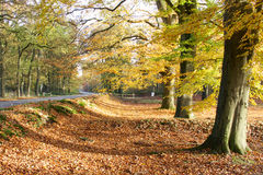 Autumn road landscape. A shot of a road in a beautiful autumn colored landscape Stock Photography