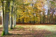 Autumn landscape. A shot of a beautiful autumn colored landscape Stock Photos