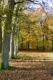 Autumn landscape. A shot of a beautiful autumn colored landscape Stock Photo