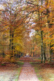 Autumn forrest road. A shot of a road in a beautiful autumn colored landscape Royalty Free Stock Photography
