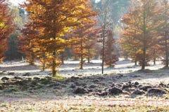 Autumn landscape. A shot of a beautiful autumn colored landscape in a little bit of fog Stock Image