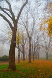 Autumn landscape showing colorful park on cold misty day Stock Photos
