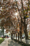 The autumn landscape in sichuan university, china Stock Photography