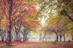 Autumn landscape. Stock Photography