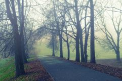 Autumn landscape - somber autumn park alley with bare trees and dry fallen orange autumn leaves in the fog. Autumn landscape - somber foggy autumn park alley stock photography