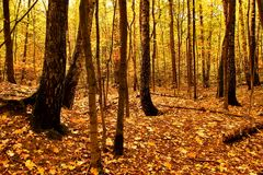 Autumn Landscape Sosta nella caduta Autunno dorato Fotografie Stock