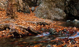 Autumn landscape with Stream in the forest Stock Photo
