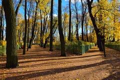 Autumn landscape in Summer garden Royalty Free Stock Photo