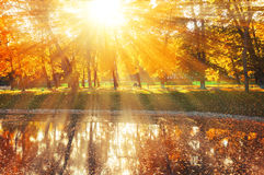 Autumn landscape of sunny autumn park lit by sunshine-autumn park with autumn trees and pond in soft light Royalty Free Stock Images