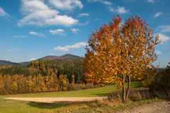 Autumn landscape in a sunny day Royalty Free Stock Photography