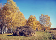 Autumn landscape in a sunny day with birch trees and h Royalty Free Stock Images