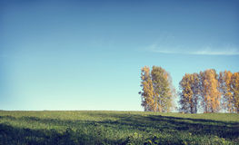 Autumn landscape in a sunny day with birch trees and m Royalty Free Stock Images