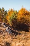 Autumn landscape on sunny day. Cindrel mountains, Sibiu county, Romania stock photography