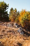 Autumn landscape on sunny day. Cindrel mountains, Sibiu county, Romania royalty free stock photo