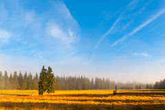 Autumn landscape sunny and hazy morning with two spruces, near Bozi Dar, Krusne Mountains, Czech Republic.  Stock Image