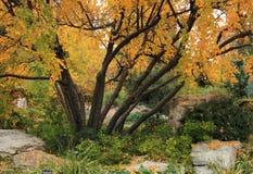 Autumn landscape of sunny October autumn park stock photo