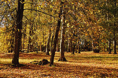 Autumn landscape in sunny weather Stock Photos