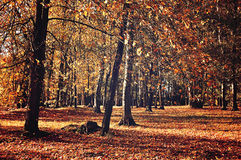 Autumn landscape in sunny weather Royalty Free Stock Image