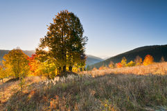 Autumn landscape at sunrise Stock Photos