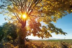 Autumn Landscape with Sunrise stock image