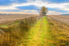 Autumn landscape - sunset over field road, cloudy sky and trees Royalty Free Stock Photography