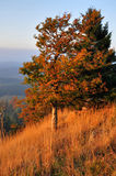 Autumn landscape at sunset Stock Photography