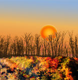 Autumn landscape with sunset and trees in the back Stock Photography