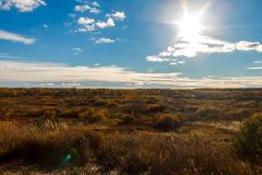Autumn landscape with a swamp covered with yellow grass and bush stock photo