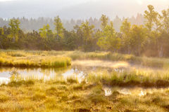 Autumn landscape with swamp,forest with standing water Royalty Free Stock Photos