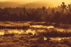 Autumn landscape with swamp,forest with standing water in sunset sky Royalty Free Stock Image