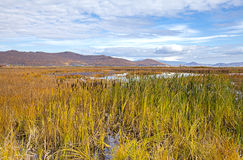 Autumn landscape in the swamp. In Kamchatka Stock Photo