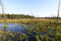 Autumn landscape swamps in northern Russia Stock Photo