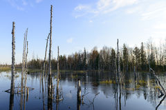 Autumn landscape swamps in northern Russia Royalty Free Stock Photography