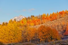 Autumn Landscape in the Tetons. A scenic landscape of the tetons in Wyoming in autumn Royalty Free Stock Photo