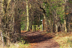 Autumn Landscape with track between Trees Royalty Free Stock Photo