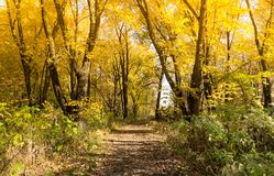 Autumn landscape trail in the forest Stock Photography