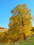 Autumn landscape with tree Royalty Free Stock Photo