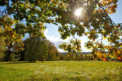 Autumn landscape. With a tree Stock Photos