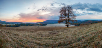 Autumn landscape with tree Stock Image
