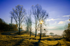 Autumn landscape, tree in backlight of the sun, the road leading Royalty Free Stock Photography