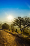 Autumn landscape, tree in backlight of the sun, the road leading Stock Images