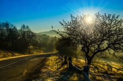 Autumn landscape, tree in backlight of the sun, the road leading Royalty Free Stock Images