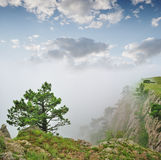 Autumn landscape, tree in a fog Stock Photography