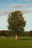 Autumn landscape with a tree,green grass and blue sky Royalty Free Stock Image