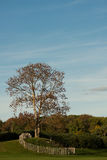 Autumn landscape with a tree,green grass and blue sky Stock Photos